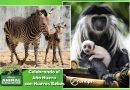 Miércoles de Vida Salvaje: Celebrando el Año Nuevo con Nuevos Bebés en Disney´s Animal Kingdom